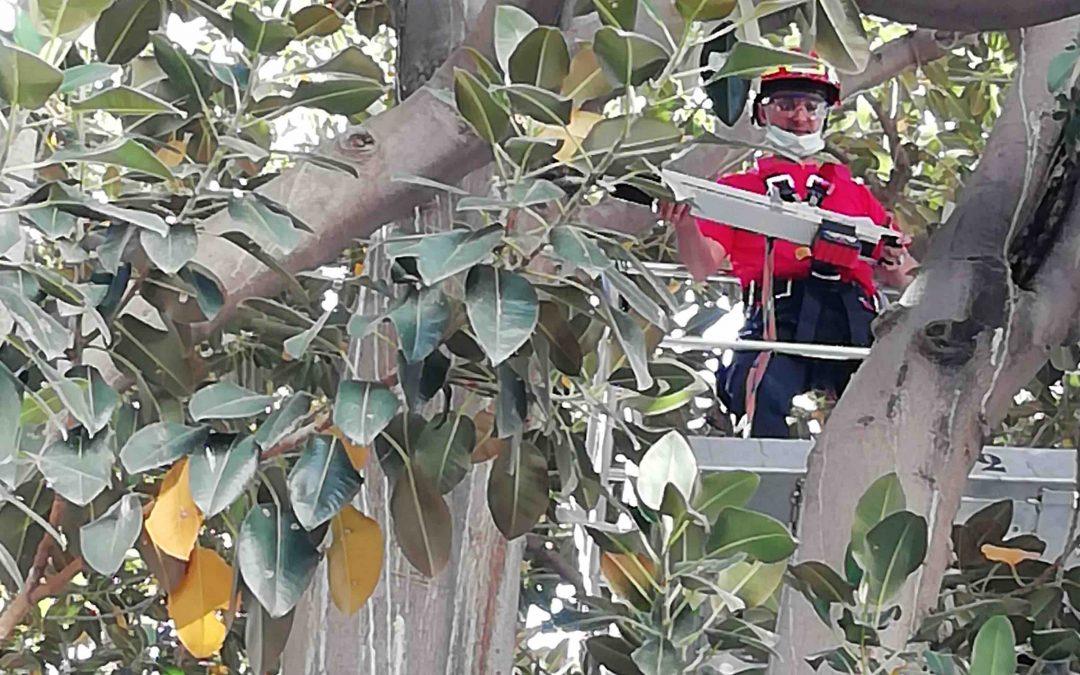 Informes de arbolado en Madrid. Juan Barrero Beltrán, Arbolista
